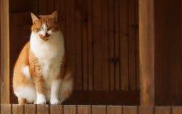 Det ideala stället för min röda kattvän arkivfoton
