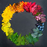 Det idérika begreppet med samlingen av färgrika naturliga objekt formade i färghjulet Royaltyfria Foton