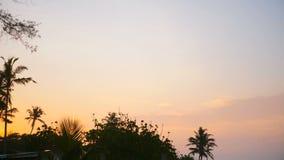 Det idylliska timelapsebakgrundsskottet av härliga palmträdkonturer på exotisk strandsoluppgång, solen stiger långsamt stock video