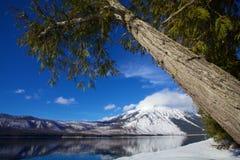 Det imponerande majestätiska trädet hänger över den iskalla blåa sjön McDonald på glaciärnationalparken på en förkylning, ett chi Arkivfoto