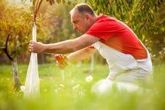 Det industriella åkerbruka temat, bonde skyddar träd med stuckit Royaltyfria Bilder