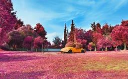 Det infraröda landskapet av Aigaleo parkerar Grekland - purpurfärgat naturlandskap royaltyfri bild