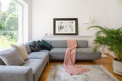 Det inramade fotoet ovanför en soffa med rosa färger filt och kuddar i en vit vardagsruminre med en stor grön palmträdväxt royaltyfri fotografi