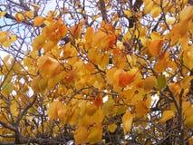 Det intressanta träd- och gulingbladet avbildar för logo- och advertizingdesigner Fotografering för Bildbyråer
