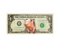 Det isolerade svinet ser ut ur en dollar i stället den amerikanska presidenten Arkivbilder
