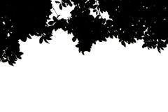 Det isolerade trädet lämnar bakgrund Arkivbilder
