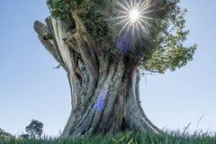 Det jätte- trädet sitter bara i ett tomt landskap fotografering för bildbyråer