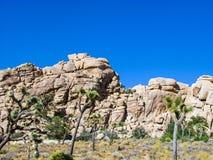 Det Joshua trädet med vaggar i nationalpark för det Joshua trädet Royaltyfri Bild