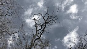 Det kala trädet är inflyttningen vinden stock video