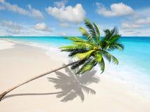 Det karibiska havet med kokosnöten gömma i handflatan Arkivbilder