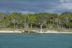Det karibiska havet med turkosvatten och gömma i handflatan nästan den Saona ön Arkivbilder