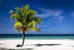 Det karibiska havet och kokosnöten gömma i handflatan Arkivbilder