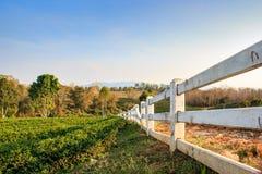 Det konkreta staketet i tekoloni på härlig himmelbakgrund royaltyfri fotografi