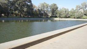 Det konstgjorda dammet parkerar in och växer omkring träd arkivfilmer
