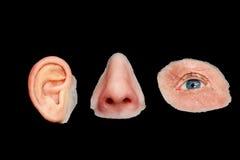 Det konstgjorda kulöra silikonet gjorde ansikts- proteser Royaltyfri Foto