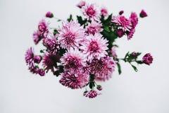 det lätta höstkortet redigerar blommor som ferie ändrar till vektorn Royaltyfria Bilder