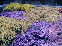 det lätta höstkortet redigerar blommor som ferie ändrar till vektorn arkivfoto