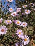 det lätta höstkortet redigerar blommor som ferie ändrar till vektorn Royaltyfri Bild