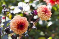 det lätta höstkortet redigerar blommor som ferie ändrar till vektorn Arkivfoton
