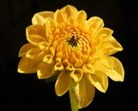 det lätta höstkortet redigerar blommor som ferie ändrar till vektorn Fotografering för Bildbyråer
