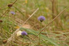 det lätta höstkortet redigerar blommor som ferie ändrar till vektorn Royaltyfri Fotografi