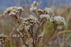 det lätta höstkortet redigerar blommor som ferie ändrar till vektorn Arkivbilder