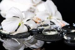 Det lågtemperatur- brunnsortbegreppet av den delikata vita hibiskusen, zen stenar intelligens Royaltyfria Foton