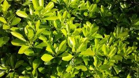 Det lösa livet vid vägen, gröna buskar Royaltyfri Bild