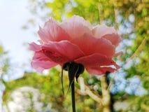 det l?tta h?stkortet redigerar blommor som ferie ?ndrar till vektorn royaltyfria foton