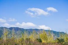 Det lantliga landskap Fotografering för Bildbyråer
