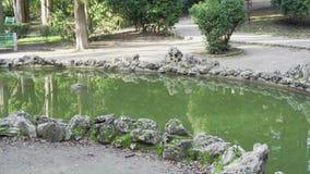 Det lilla dammet i det gammalt parkerar stock video
