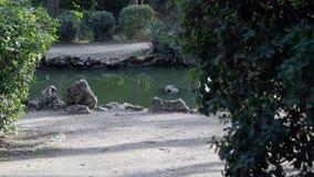 Det lilla dammet i det gammalt parkerar arkivfilmer