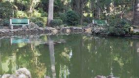 Det lilla dammet i det gammalt parkerar lager videofilmer