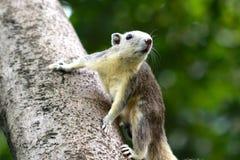 Det lilla djurlivet för ekorre i natur royaltyfri foto