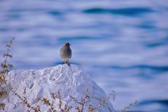 Det lilla fågelanseendet på vaggar vid havet royaltyfri bild