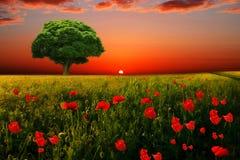 Det lilla gröna trädet Royaltyfria Foton