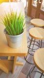 Det lilla gröna trädet lägger in garnering på trätabellen i kafé jpg Royaltyfria Bilder