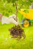 Det lilla trädet med rotar på grön bakgrund Royaltyfria Foton