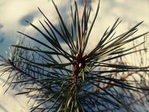 Det lilla trädet sörjer Fotografering för Bildbyråer
