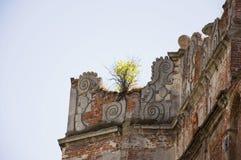 Det lilla trädet växer på fördärvar upp den gamla slotten arkivfoto