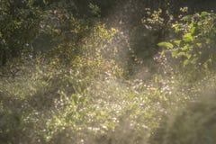 Det ljusa glödet av sol`en s rays exponera försiktigt gräset, Arkivbilder