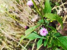 Det ljust - purpurfärgad blomma royaltyfri bild