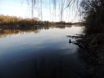 Det lugna vattnet Arkivbild