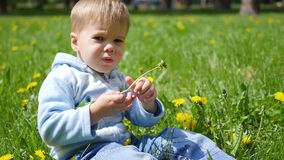 Det lyckliga barnet sitter i ett fält av maskrosor Lek av barnet i den öppna luften Royaltyfri Fotografi