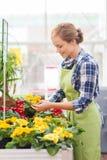 Det lyckliga kvinnainnehavet blommar i växthus Royaltyfri Bild