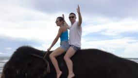 Det lyckliga unga paret rider på en elefant på bakgrunden av ett tropiskt hav stock video