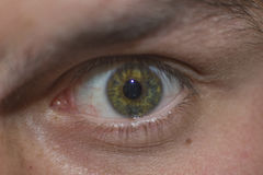 Det mänskliga ögat ser mig Arkivbild