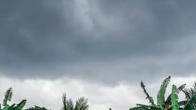 Det mörka molnet ovanför de gröna träden royaltyfri bild