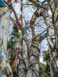 Det magiska trädet vars filialer omges av färgrika tyger i Nan Riverside Art Gallery, parkerar royaltyfri foto