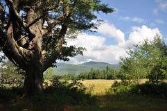 det maine berg sörjer Royaltyfri Foto